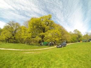 Tree Radar at Hampstead Heath