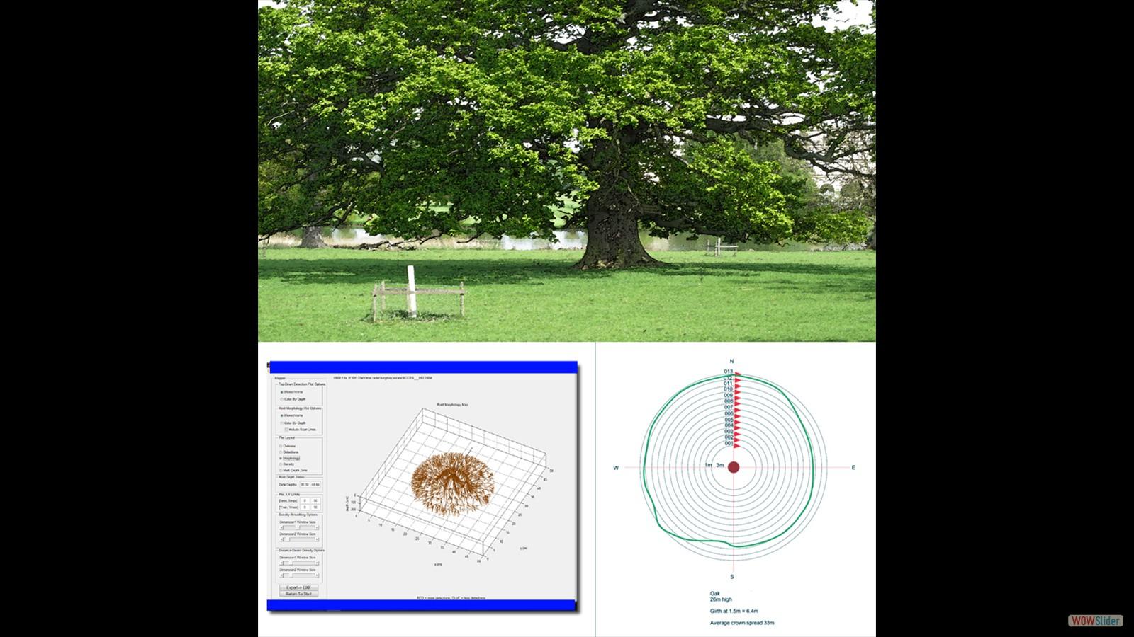 Tree plus scans